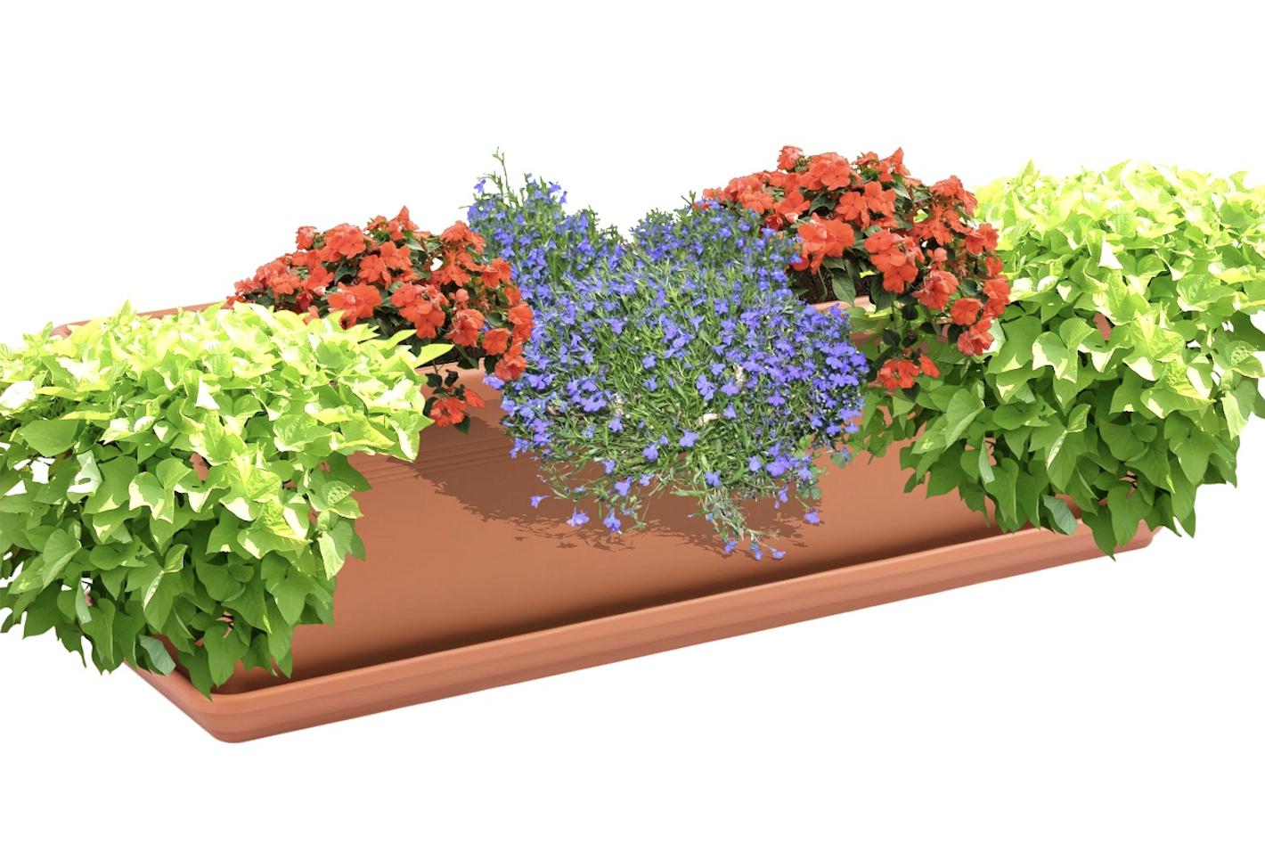 ziedi balkona kastei ēnā